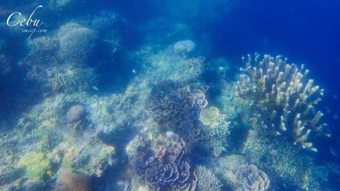 菲律賓薄荷島|出海追海豚/巴里卡薩大斷層浮潛餵魚/蜜蜂農場有機料理