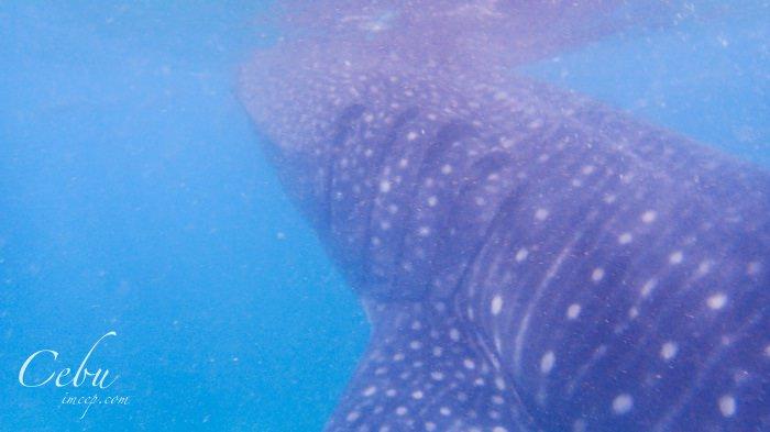 菲律賓宿霧|去歐斯陸Oslob看鯨鯊的心得&注意事項